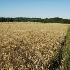 The Barley Test