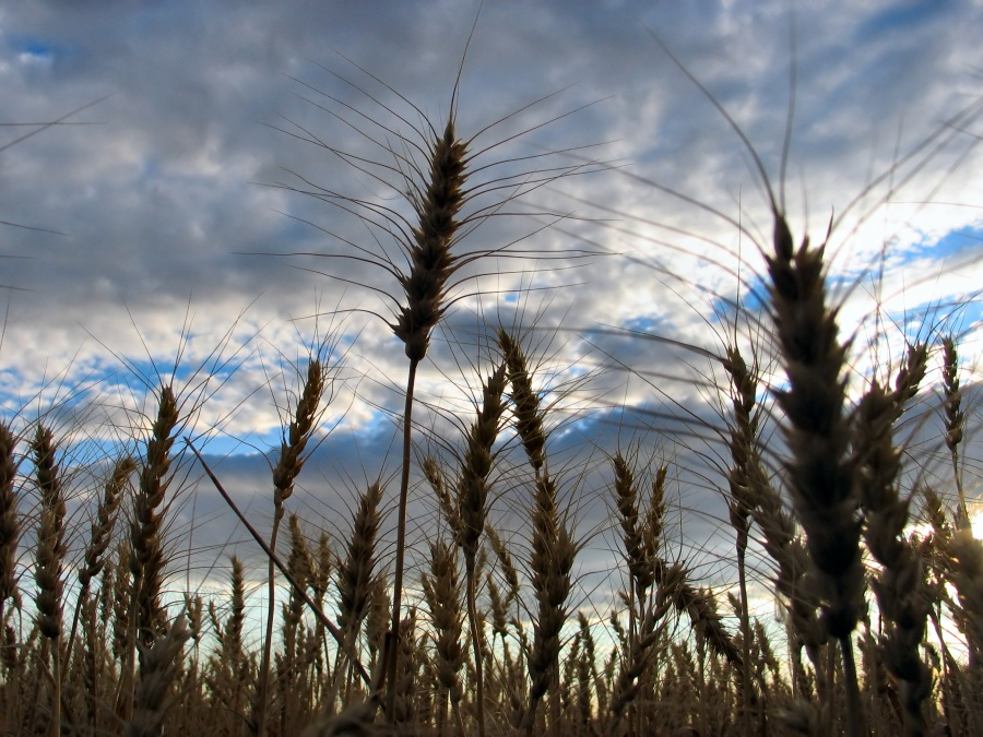 Rebbe Nachman's Stories: The Tainted Grain